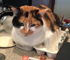 Brooding cat.