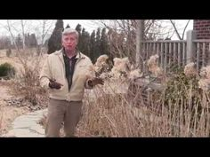How To Prune Hydrangeas each Spring - YouTube