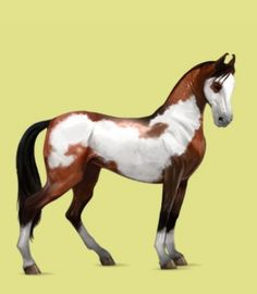 special breed s of horses   this is one of my most favorite breeds of horses on howrse it s called ...