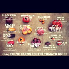 A visual guide to this season's tomatoes! #Padgram