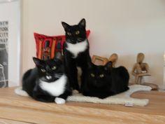 Jones, Jack & Kitty Kat | Pawshake Binkom