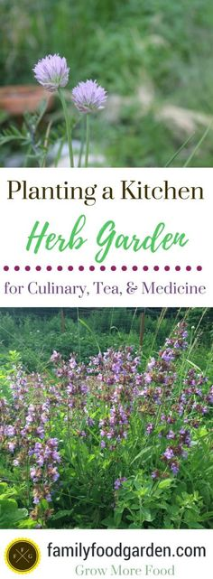 Planting a Kitchen Herb Garden