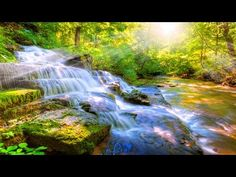 8 HOURS Relaxing Nature Sounds-Sleep-Study-Meditation-Spa Water Sounds Bird Song - YouTube