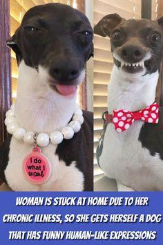 #Woman #Stuck #Home #Chronic #Illness #Dog #Funny #Human #Expressions Photography Pics, Creative Photography, Nature Photography, Reflection Photography, Funny Expressions, Stylist Tattoos, Italian Greyhound, Bored Panda, S Pic