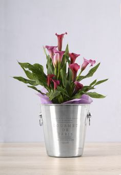 Make this Spring Day one to remember with lovely plant gifts from NetFlorist. Inspire a loved one to enjoy the season with stunning plant gifts that come in impressive containers and pots! They'll brighten up their home or office space like the springtime brightens up the world! Zantedeschia, Personalized Wine, Spring Day, The Fresh, Cool Gifts, Wines, Planter Pots, Inspire, Space