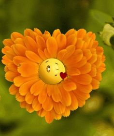 The best animated GIF reactions, funny pictures & videos and joke of the day. Discover & share your favorite Reaction GIFs Beautiful Gif, Beautiful Flowers, Bisous Gif, Gif Bonito, Beau Gif, Emoticon Faces, Smiley Faces, Good Morning Gif, Photocollage