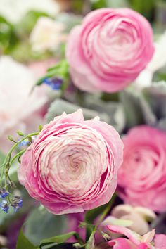 Close up of our ranunculus, with Anne Liles Photography
