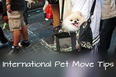 The Overseas Pet - How Do I Move My Pet Internationally?
