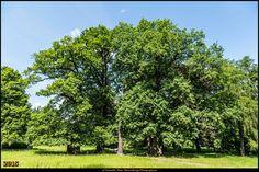Schlosspark Buch 1 #Berlin #Deutschland #Germany #biancabuergerphotography #igersgermany #igersberlin #IG_Deutschland #IG_Berlin #ig_germany #shootcamp #shootcamp_ig #canon #canondeutschland #EOS5DMarkIII #5Diii #pickmotion #berlinbreeze #diewocheaufinstagram #berlingram #visit_berlin #AOV5k #pankowbuch #schlossparkbuch #BezirkPankow #berlinbuch #park