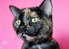 """Check out Amy!   """"She is a sweet and lovable girl and she wants a home so desperately.""""  See her page for adoption information!"""