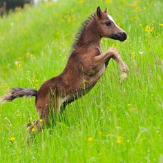 Leaping foal!
