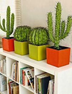 Cactus plants can be a beautiful interior to create your home more liked, a very adorable idea. It's not a good idea to put some of your indoor plants for a few factors. Succulents In Containers, Cacti And Succulents, Cactus Plants, Garden Plants, Indoor Plants, Cactus Flower, Flower Pots, Baby Cactus, Cactus E Suculentas