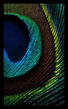 Up close and personal, peacock feather Feather Art, Peacock Feathers, Feather Texture, Peacock Colors, Feather Wallpaper, Cool Wallpaper, Peacock Images, Feather Photography, Creative Photography