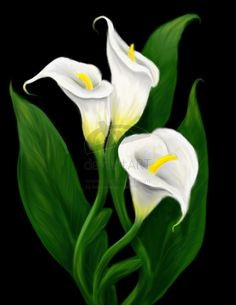 calla lily painting | calla lilies by invisiblehinge digital art drawings paintings still ...