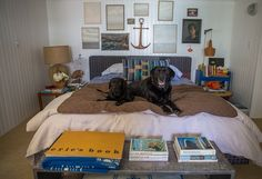 Nathan Turner and Eric Hughes' labs in At Home with Dogs and Their Designers