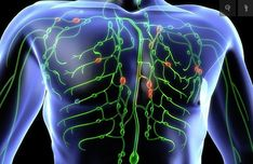 If you're constantly getting sick, feel tired all the time, or have weight issues, you may want to think about cleansing your lymphatic system. The lymphatic system has three functions: Fluid R. Tonsil Stones, Lymphatic Drainage Massage, Radiation Therapy, Lymph Nodes, Natural Antibiotics, Lymphatic System, Acupuncture, How To Stay Healthy, Natural Health