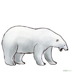 How to Draw a Polar Bear: 14 Steps (with Pictures) - wikiHow