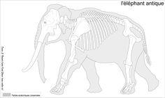 Paleoloxodon antiquus, the extinct straight-tusked elephant Elephant Anatomy, Animal Anatomy, Lovely Creatures, Fantasy Creatures, Terryl Whitlatch, Skeleton Anatomy, Animal Skeletons, Animal Bones, Anatomy Reference