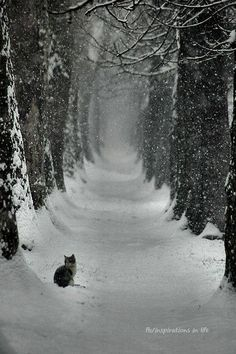 Poesje in de sneeuw in een laan met bomen