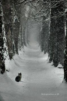 Pin By Sharon Carroll On Winter Wonderland Pinterest Cardinals - 30 wonderfully wintery scenes around world