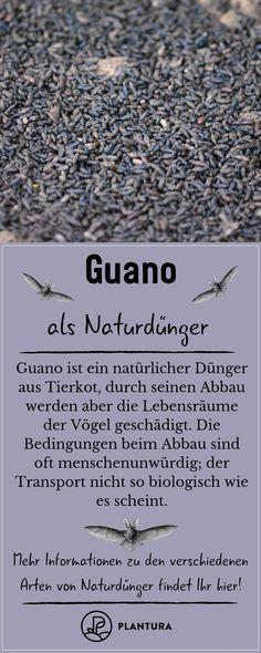 Guano als Naturdünger: Auch wenn die Wirkung von Guano unbestritten ist, können wir nur von diesem Dünger abraten, da seine Gewinnung weder nachhaltig noch fair abläuft. Weitere Alternative Naturdünger findet Ihr in unserem Beitrag.  #garten #gardening #duenger #naturduenger
