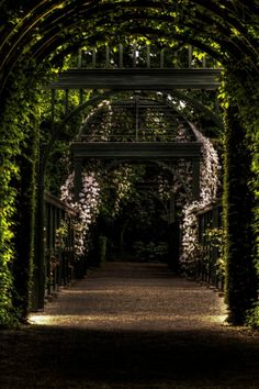 Garden Path Way Park Mobile Wallpaper - Mobiles Wall