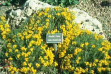 There are many benefits to using Colorado native herbaceous perennials for home and commercial landscapes. They are naturally adapted to Colorado's climates, soils and environmental conditions. When they are correctly sited, they make ideal plants for a sustainable landscape.