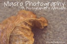 Macro Photography: A Photographers approach