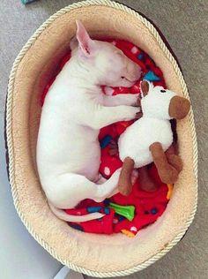 Sleepin Bébé Bullie❤