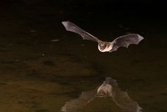 The state is allowing citizen scientists to monitor bat populations via their local library.