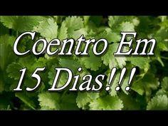 Como Plantar Coentro Pela Raiz( Economize Dinheiro!!! ) - YouTube