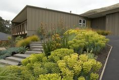Low maintenance, drought tolerant, and dramatic: clouds of medium-height rounded succulents, with a few tall spiky accents and some low ground huggers.