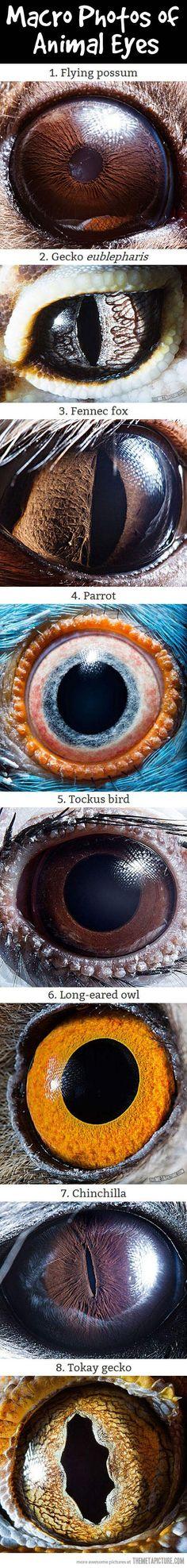 Macro Photos of Animal Eyes…