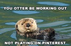 Know it all otter
