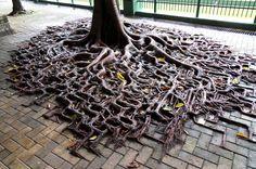 A tree's roots grow along cracks between bricks in Hong Kong, photographed on September 3, 2010.