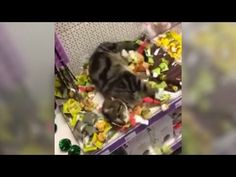 Cat Sneaks Into Pet Store And Goes Crazy In Catnip Toy Section - CatTime