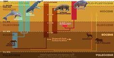 Penemuan Ilmuwan Ungkap Kudanil Merupakan Saudara Paus dan Lumba-lumba - VIVAforum