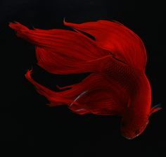 Rich, flowy, airy, silky, swift, quiet, and natural. Red Beta