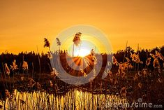 Forest Pond Sunset Along The Bruce Trail Stock Photo - Image of bruce, pond: 116435834 Ontario, Pond, Trail, Fair Grounds, Hiking, Canada, Stock Photos, Celestial, Sunset