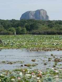 yala national park | Elephant shaped rock with amazing lotus pond