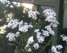 Orchids 101: Get Started Growing Orchids at Home