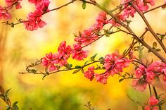 Spring is beautiful Canvas Print nature, flower, blooming, blossoms...