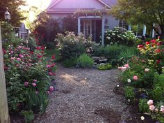 """Great blog """"Why I Grow Roses"""" from The Garden Diary"""