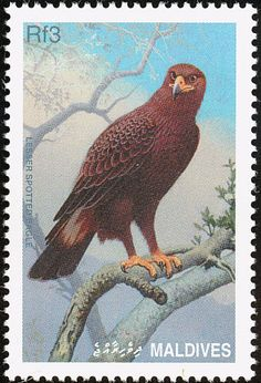 Indian Spotted Eagle stamps - mainly images - gallery format
