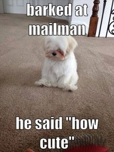 Barked At The Mailman funny cute memes adorable dog pets meme lol funny quotes…