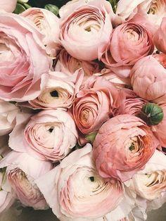 Hydrangea Flower, Floral Flowers, White Wax Flower, Flower Wall Backdrop, Wedding Planning Checklist, Event Planning, Spring Wedding Flowers, May Weddings, Wedding Confetti
