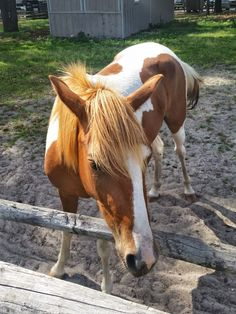 Chincoteague Ponies | Wild Horses Couldn't Drag You Away from Chincoteague Island | FATHOM USA: The South Travel Guides and Travel Blog