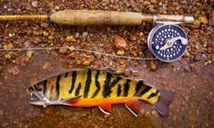 tiger trout | Tiger Trout | Fly Fishing | Gink and Gasoline | How to Fly Fish ...