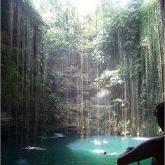 "Mexico - Rivera Maya if you ever go dive in ""los cenotes"" great!! Yes, I have swam and cliff jumped there and I loved every minute of it <3"