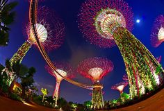 Surreal Photos of Singapore's Solar-Powered Supertrees -